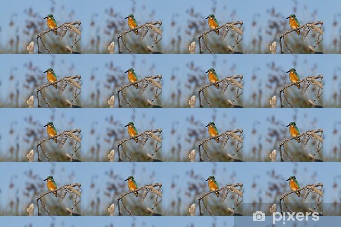 Tapeta na wymiar winylowa Zimorodek na drzewie - Ptaki