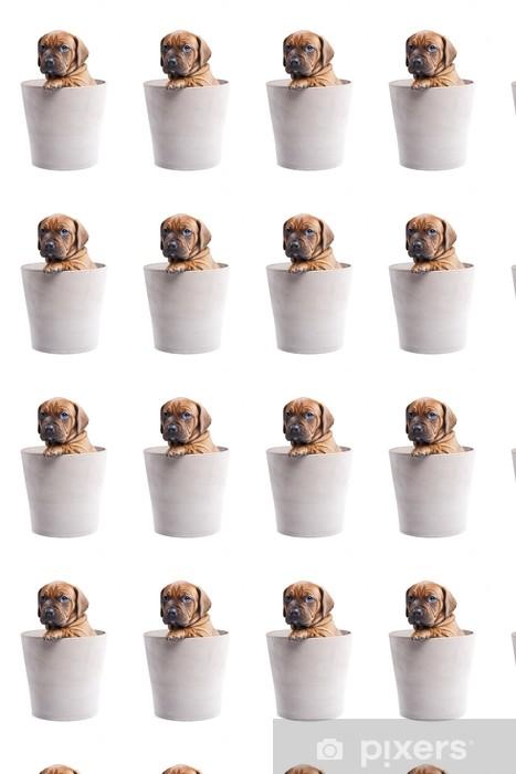 Vinylová tapeta na míru Single mladý šťastný pes v hrnci na bílém pozadí - Criteo