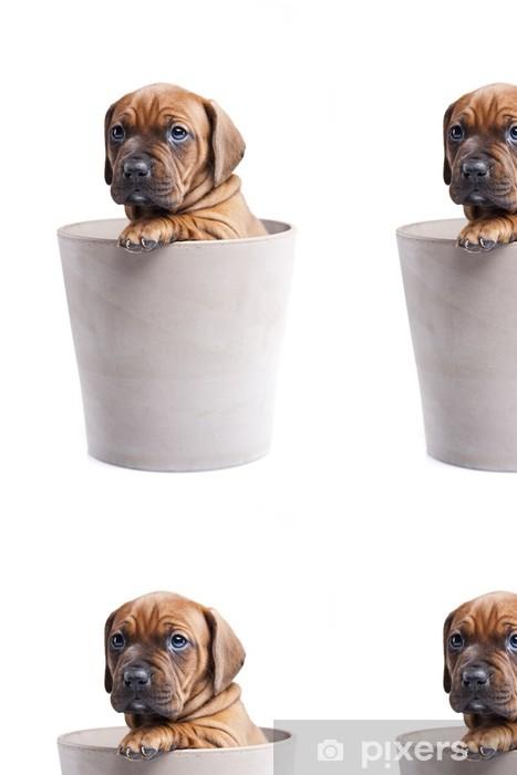 Vinylová Tapeta Single mladý šťastný pes v hrnci na bílém pozadí - Criteo