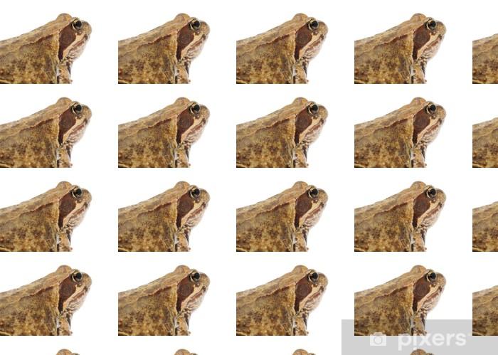 Papier peint vinyle sur mesure Grande grenouille brune sur fond blanc - Autres Autres