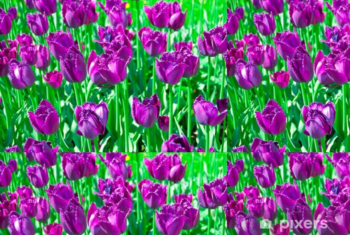 Vinylová Tapeta Fialové tulipány -