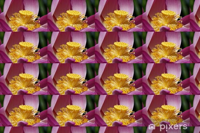 Lotus Flower Wallpaper Pixers We Live To Change