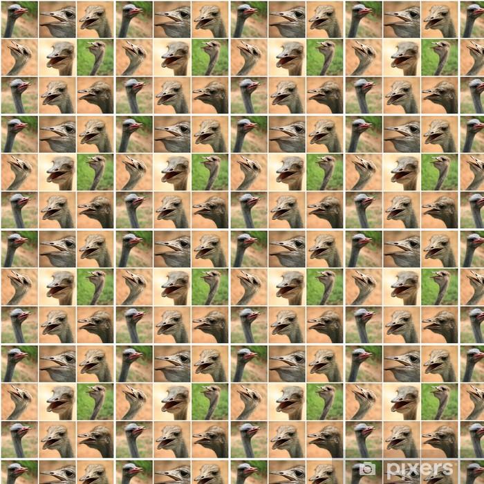 Vinyltapete nach Maß Eine Collage von Fotos aus dem Ostrich Farm - Vögel