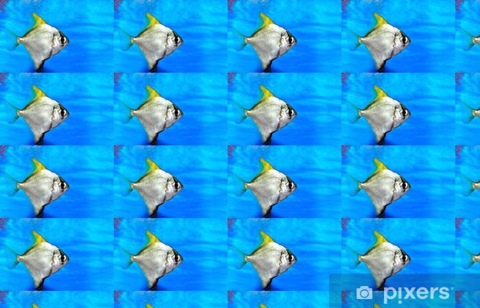 Colorful fish in aquarium saltwater world Vinyl custom-made wallpaper - Aquatic and Marine Life