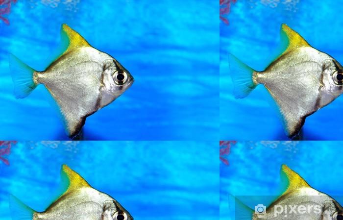 Vinyltapete Bunte Fische im Aquarium Salzwasser-Welt - Unterwasserwelt