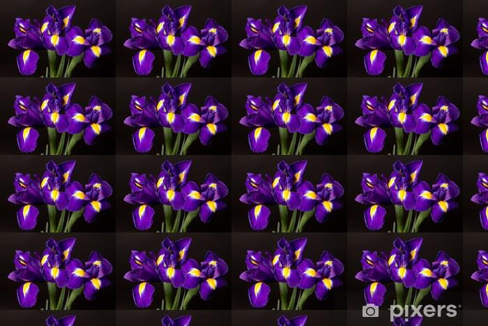 Papel pintado estándar a medida Primer plano de un iris bandera azul sobre negro - Abstractos