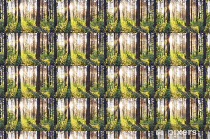 Papier peint vinyle sur mesure Coucher du soleil - Forêt
