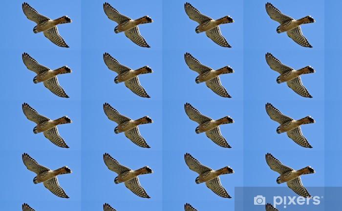 American Kestrel (Falco sparverius) Vinyl custom-made wallpaper - Birds