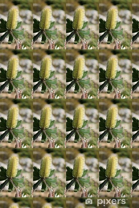 Vinylová tapeta na míru Banksia integrifolia - druh stromu, který roste v Austrálii - Stromy