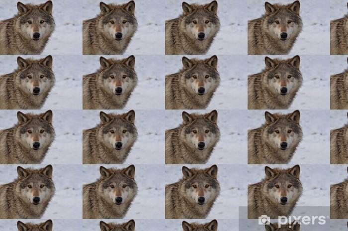 Papier peint vinyle sur mesure Loup nord-américain - Thèmes