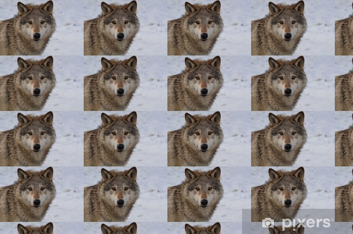 North American Wolf Vinyl custom-made wallpaper - Themes