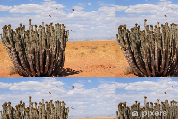 Vinylová Tapeta Euphorbe, kaktusu du Damaraland - Afrika
