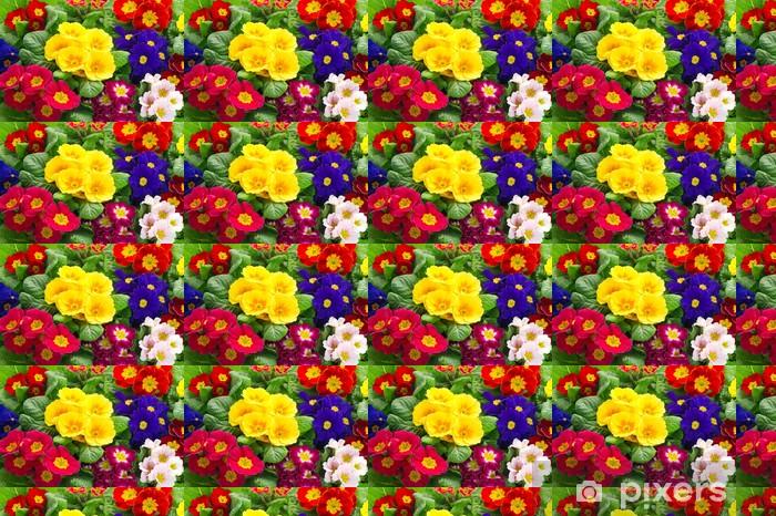 Tapeta na wymiar winylowa Kolorowe świeże kwiaty pierwiosnki wiosenne - Kwiaty