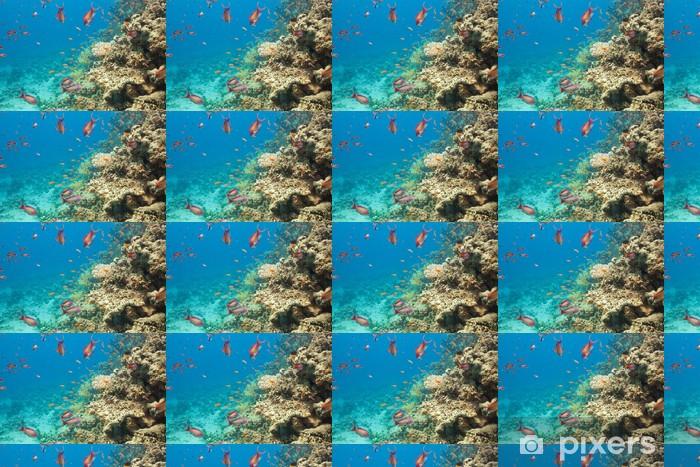 Papier peint vinyle sur mesure Scalefin anthias poissons et de coraux dans la mer - Animaux marins