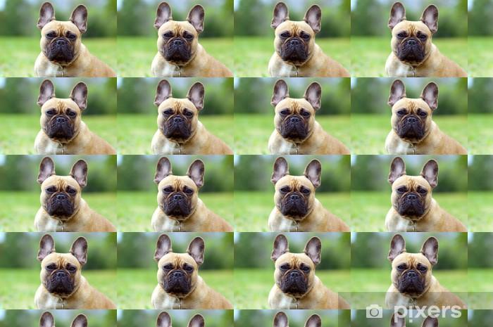 Vinylová tapeta na míru Francouzský Booldog, pes portrét detailní - Savci