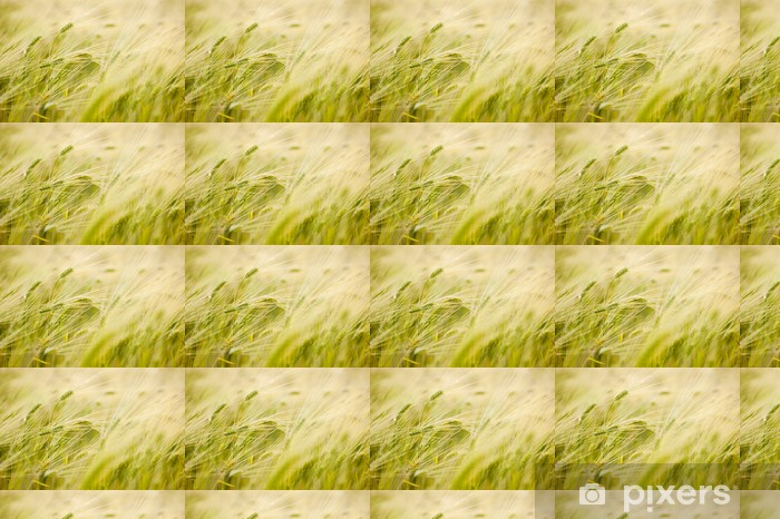 barley field Vinyl custom-made wallpaper - Meals