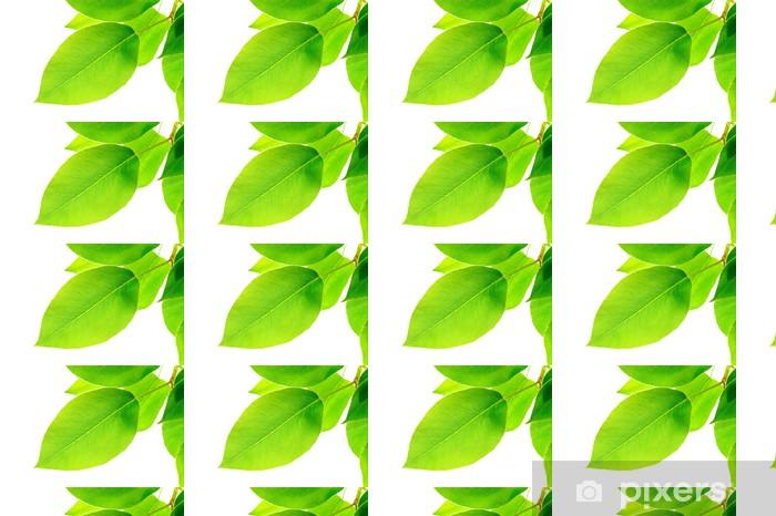 Vinyltapete nach Maß Grüne Blätter auf weißem Hintergrund - Bäume
