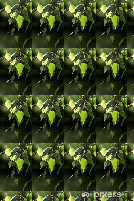 Papier peint vinyle sur mesure Bouleau feuilles vertes rétro-éclairé sur un fond défocalisé - Plantes