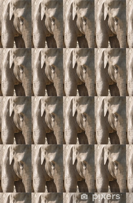 Tapeta na wymiar winylowa Bliska słonia - Tematy
