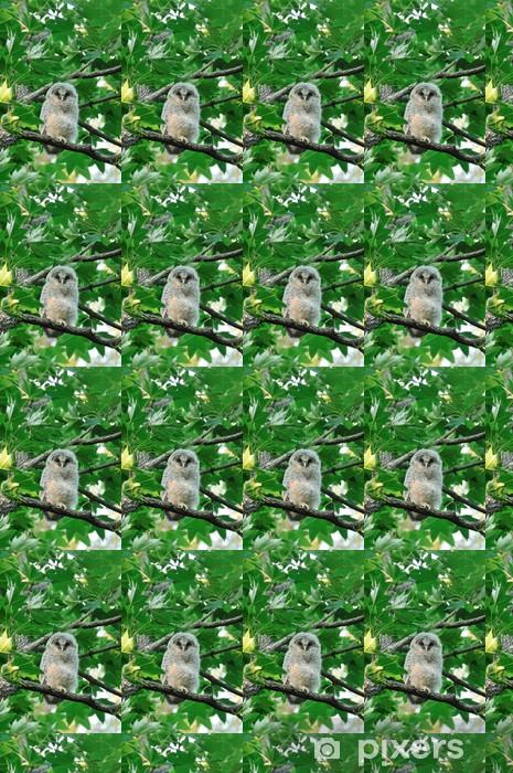 Tapeta na wymiar winylowa Pisklęta sowy - Ptaki