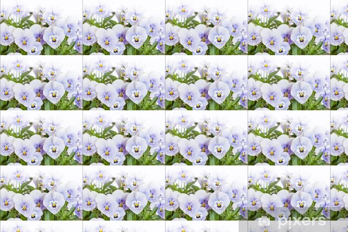 Vinylová tapeta na míru Mehrere Hornveilchen (Viola cornuta) na bílém pozadí - Květiny