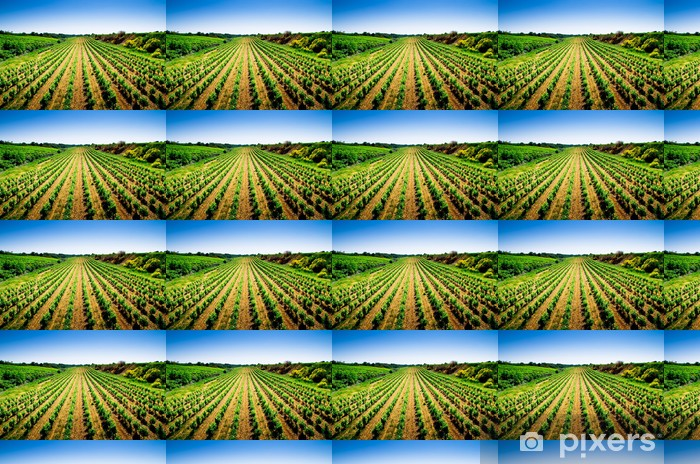Tapeta na wymiar winylowa Winorośl Chodniki - Rolnictwo