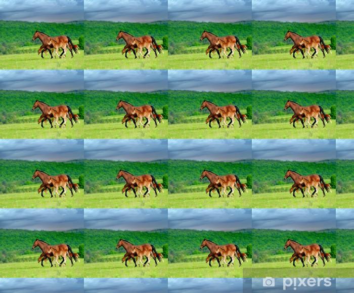 Tapeta na wymiar winylowa Konie - Ssaki