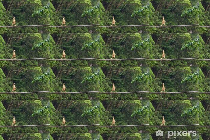 Tapeta na wymiar winylowa Kobieta idzie na most w dżungli - Tematy