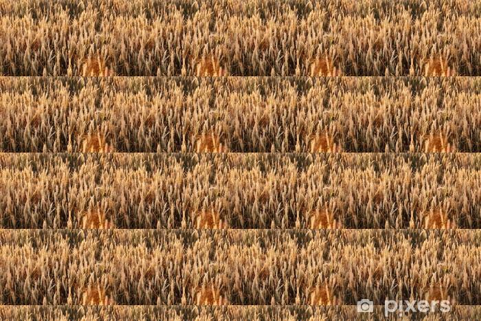 Tapeta na wymiar winylowa Pole pszenicy - Rolnictwo