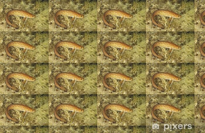 Vinyl behang, op maat gemaakt Gaidropsarus Mediterraneus op de achtergrond van water gras. - Onderwater