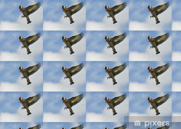 Carta da parati in vinile su misura Cardellino 02 - Uccelli