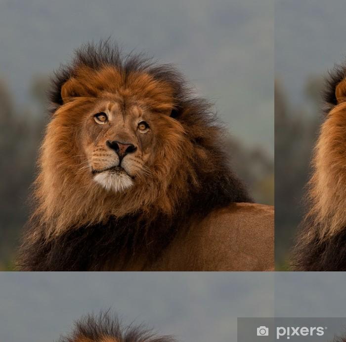 Unique Lion Portrait Wallpaper Pixers We Live To Change