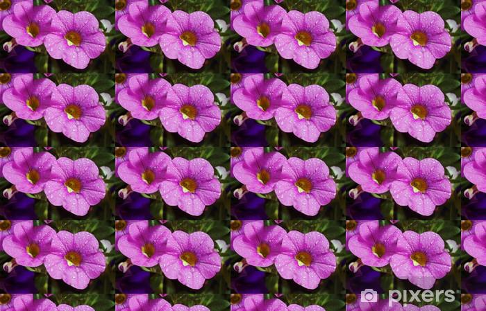Tapeta na wymiar winylowa Kwiat calibrachoa carnaval z kropelkami wody - Kwiaty