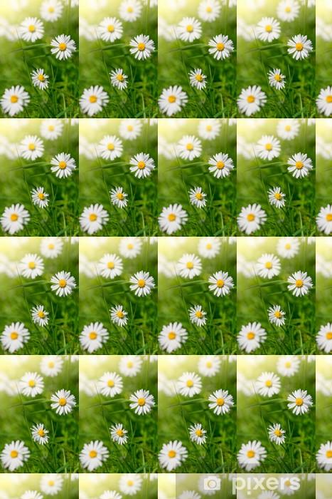 Vinyltapete nach Maß Weiße Gänseblümchen in Wiesen, close-up shot - Blumen