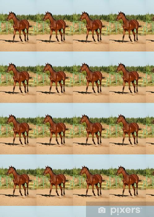 Vinyltapete nach Maß Horse walking - Säugetiere