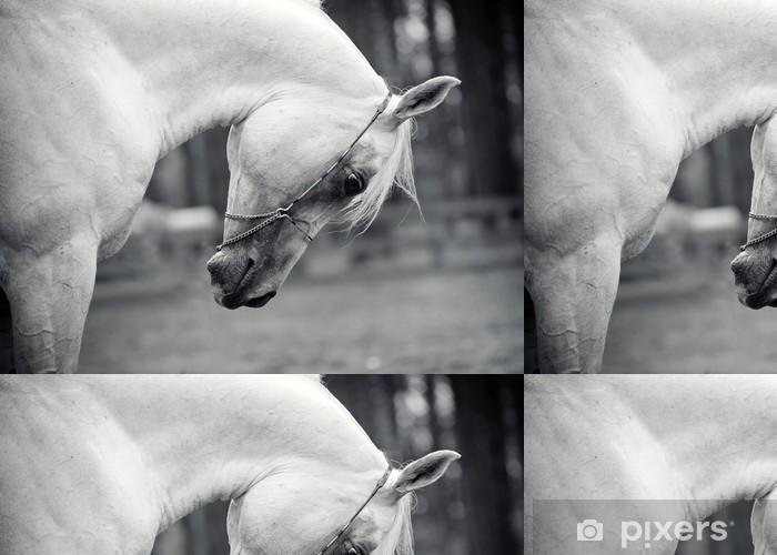 Vinyltapete Weißes Pferd - Themen