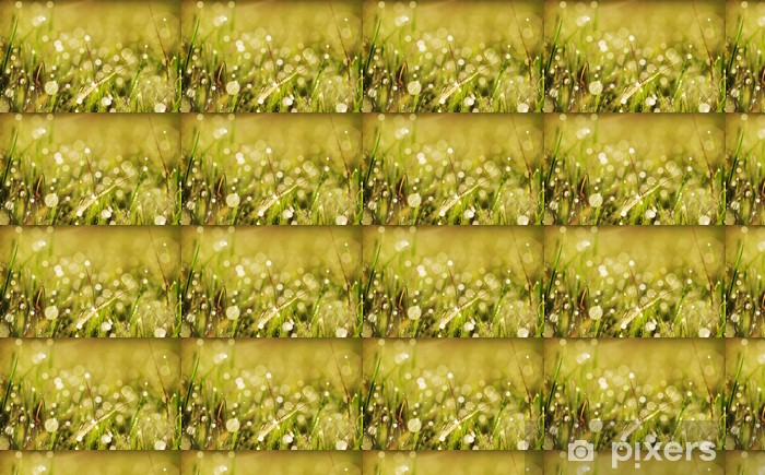 Tapeta na wymiar winylowa Rosą trawy jesienią - Rośliny