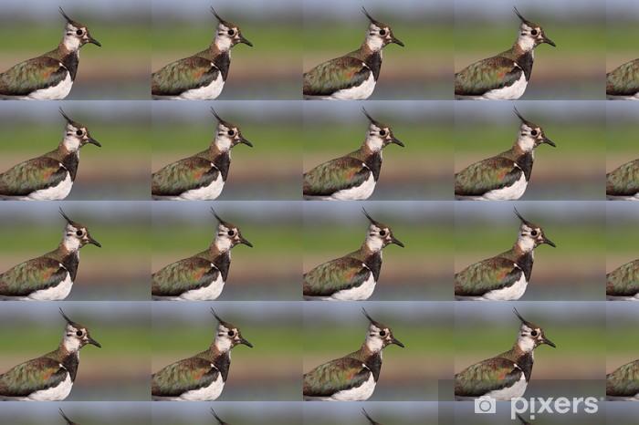 Tapeta na wymiar winylowa Czajka - Ptaki