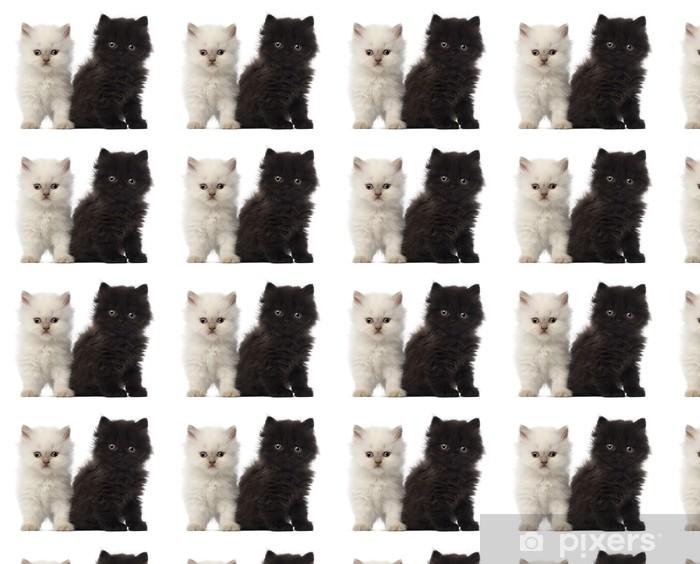 Tapeta na wymiar winylowa Portrait of British Longhair Kitten posiedzenia, 5 tygodni - Ssaki