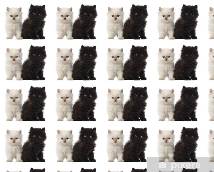 Portrait of British Longhair Kitten sitting, 5 weeks old Vinyl custom-made wallpaper - Mammals