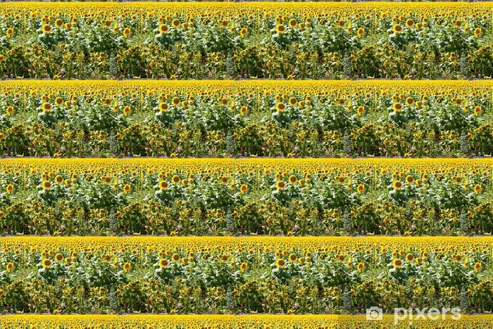 Tapeta na wymiar winylowa Pole słoneczników - Kwiaty