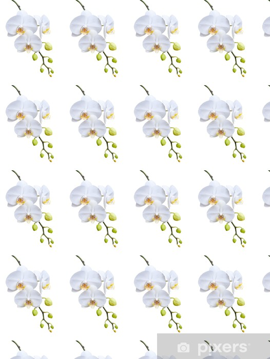 Papier peint vinyle sur mesure Belle floraison orchidée blanche. - Fleurs