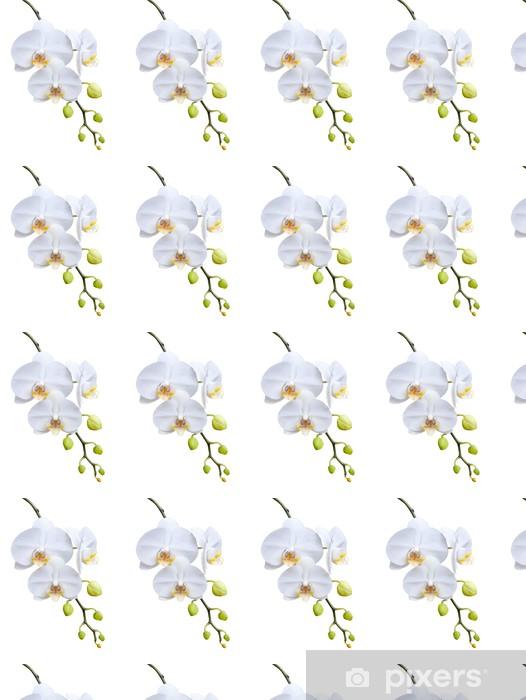 Tapeta na wymiar winylowa Piękna biała orchidea kwitnąca. - Kwiaty