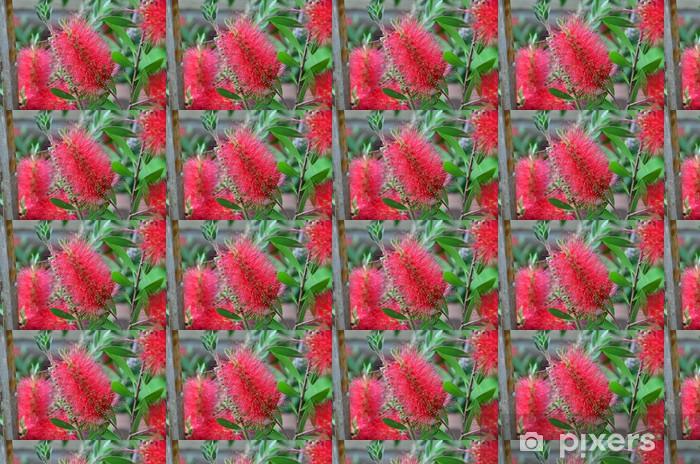 Tapeta na wymiar winylowa Australijska roślin - Rośliny