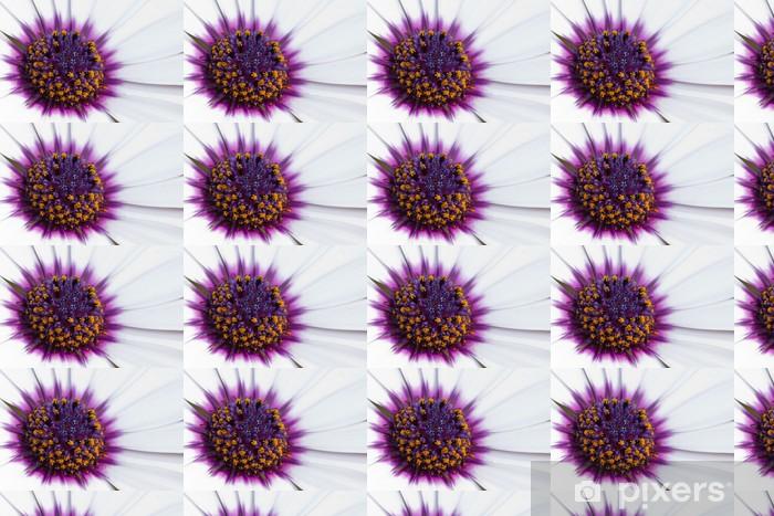 Vinylová tapeta na míru Close-up z afrického nebo Cape Daisy (Osteospermum) květ - Květiny