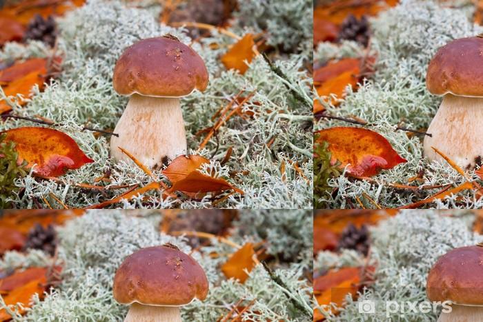 Vinylová Tapeta Boletus edulis hub v lese - Roční období