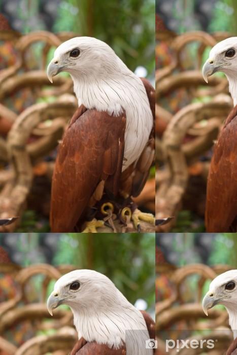 Vinylová Tapeta Brahminy Kite, Red-couval Sea Eagle stojí na větvi - Témata