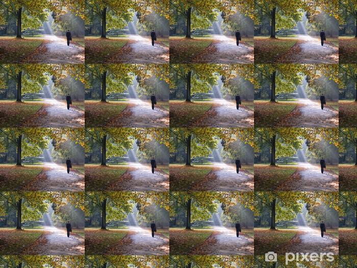 Tapeta na wymiar winylowa Ścieżka w parku jesienią. Sunlight. Zwiedzanie. - Woda