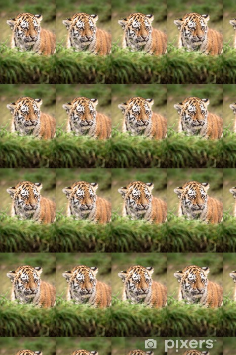 Vinyltapete nach Maß Tigerbaby - Säugetiere