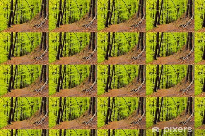 Tapeta na wymiar winylowa Krajobraz las wiosną po deszczu. Zielone liście. -